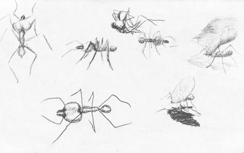 Brasilia ants drawing in Brazil's capital.
