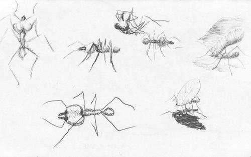 Brasilia ants drawing in Brazil's capital.