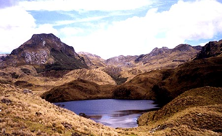 The golden horse hair grass in Cajas National Park, Ecuador.
