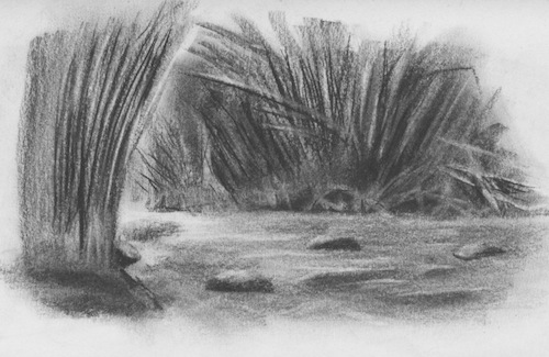 Drawing of Choroni's bamboo creek