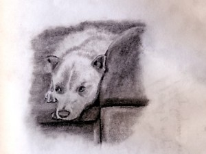 A travel sketch of my host's dog. this was in Queretaro, Mexico.