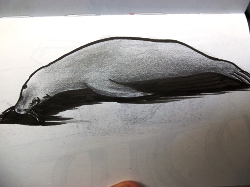 Travel sketching of Galapagos Sea Lions