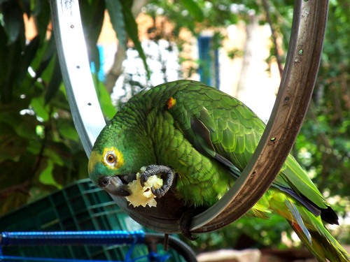 The green parot of the family.