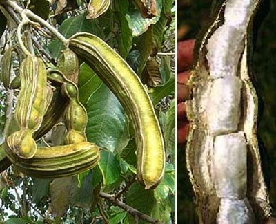The fruit called Pacay.