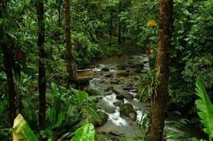 The Jungle in Quepos, Costa Rica.