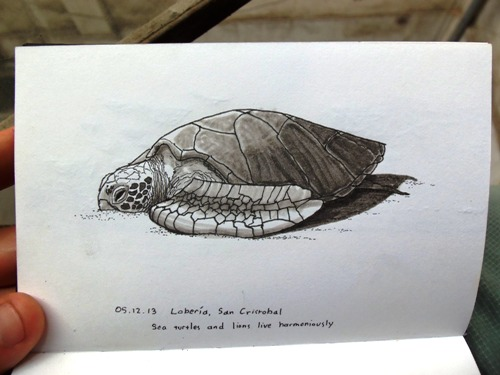 Sea turtle drawing in the Galapagos