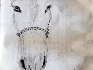 A sketch of a donkey at the border of Mexico and Guatemala.