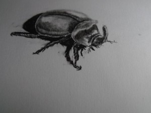A Sketch of a Bug in Peru