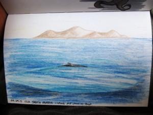Sketching Galapagos Whales