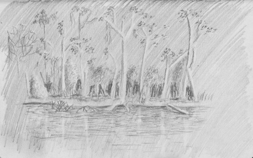 A basic travel drawing of the Amazon Rainforest in Brazil.