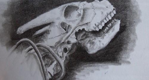 A travel drawing of bones in Chile's Atacama Desert