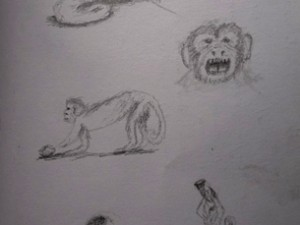Drawing of Misahualli monkeys