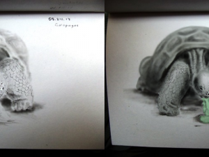 Before and after digital enhancement of a drawing of galapgo.