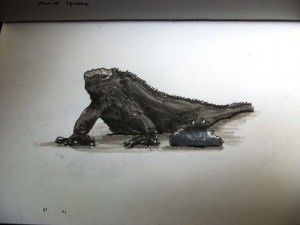 Travel drawing of Galapagos Marine Iguana
