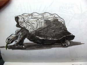 Travel drawing in the Galapagos Islands