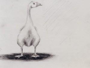 Sketching a Goose in Nicaragua