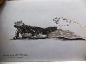 Sketching the Marine Iguanas