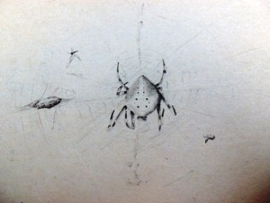 Patagonia spider drawing traveling in Argentina, puerto Natales