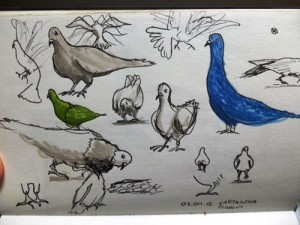 Sketch of pigeons using Pitt Pens