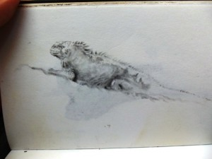 Travel Sketch in the Galapagos